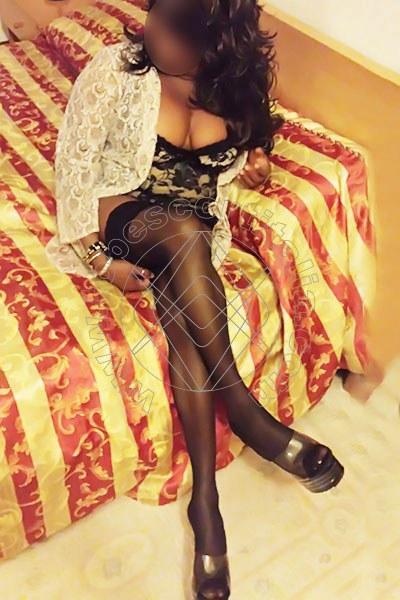 Rosa IMOLA 3486368029